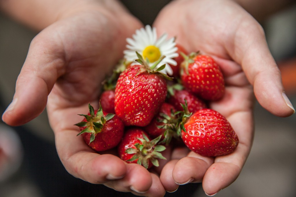 Share a handful of strawberries in the garden