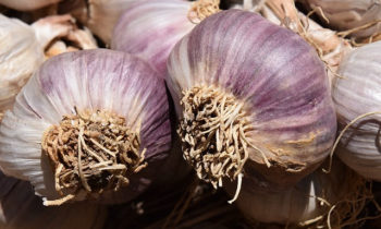 This Weekend: Garlic at the Garden & End of Year Clean Up
