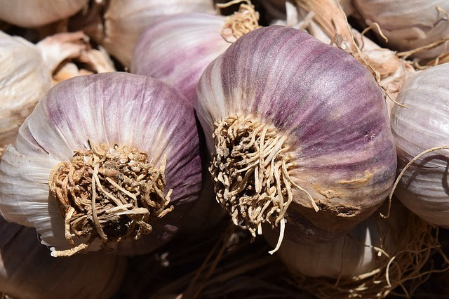 Garlic Planting & Fall Preparation Workshop