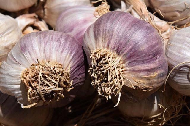 Garlic Planting & Fall Preparation Workshop